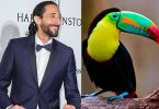 que-celebs-animales-parecidos-iguales-look-animal-famosos-adrien-jpg-imgw-1280-1280